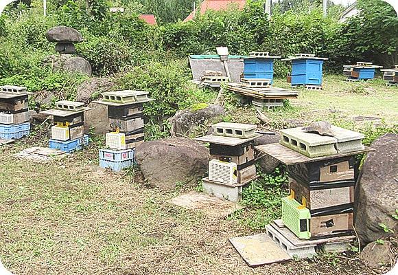 養蜂家の今川さん