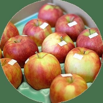 水野農園りんご